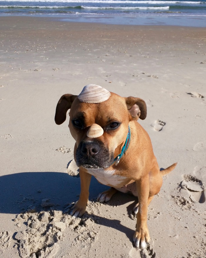 dog wearing shells
