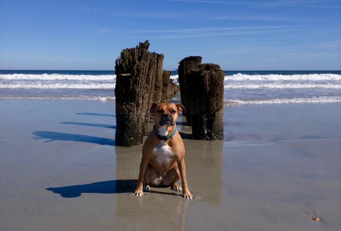 dog at freeman park carolina beach