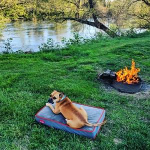 dog, campfire, river
