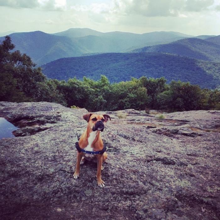 Bugsy hiking Spy Rock