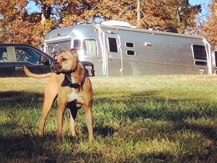 bugsy and the airstream