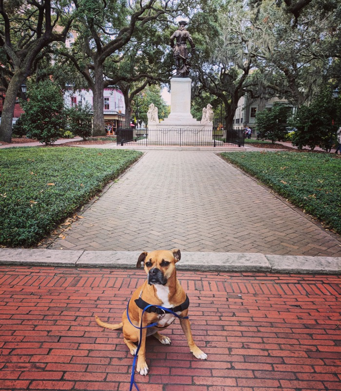 bugsy in savannah