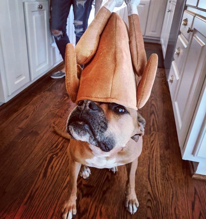 bugsy at thanksgiving