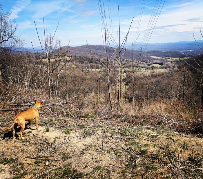 hiking mint springs park