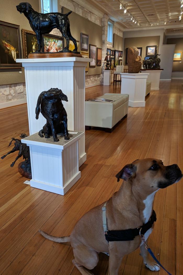 dog friendly art gallery in fredericksburg