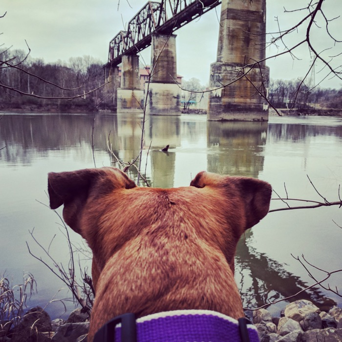 shelby bottoms cumberland river