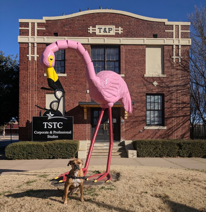 Bugsy and a flamingo in Abilene
