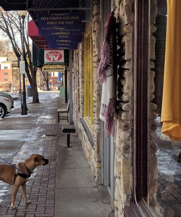 bugsy shopping in historic downtown branson