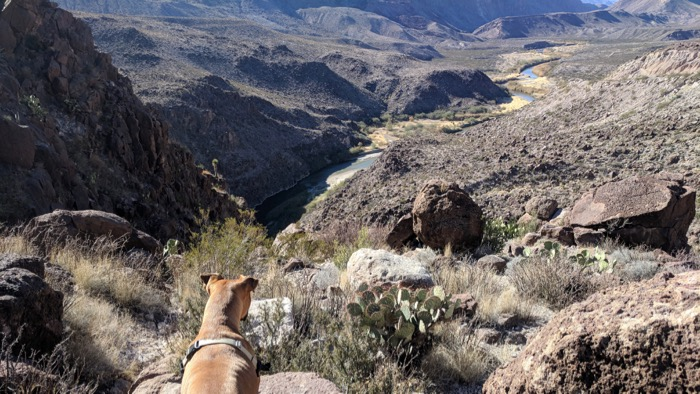 Bugsy overlooking the Rio Grande outside Terlingua