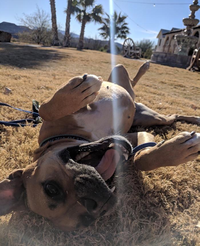Bugsy at Lajitas Resort