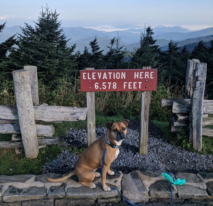 Bugsy on Mt Mitchell