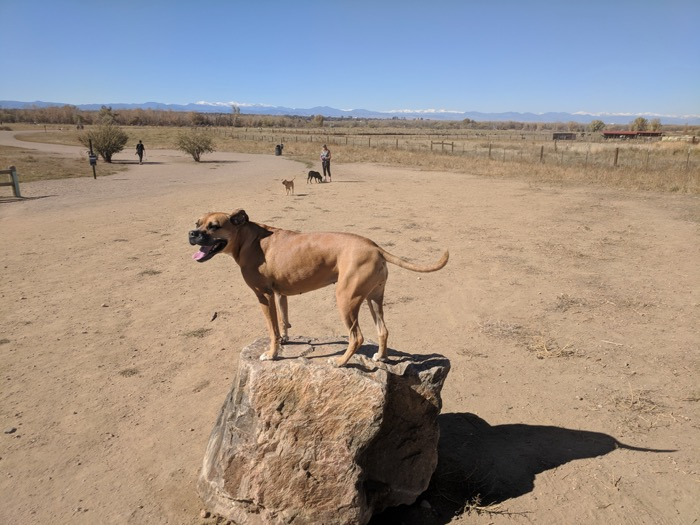 Dog Off-Leash Area at Cherry Creek State Park