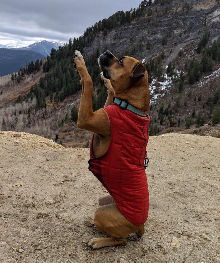 Bugsy begging at Silver Lake