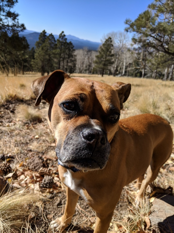 Bugsy hiking the Kachina Trail