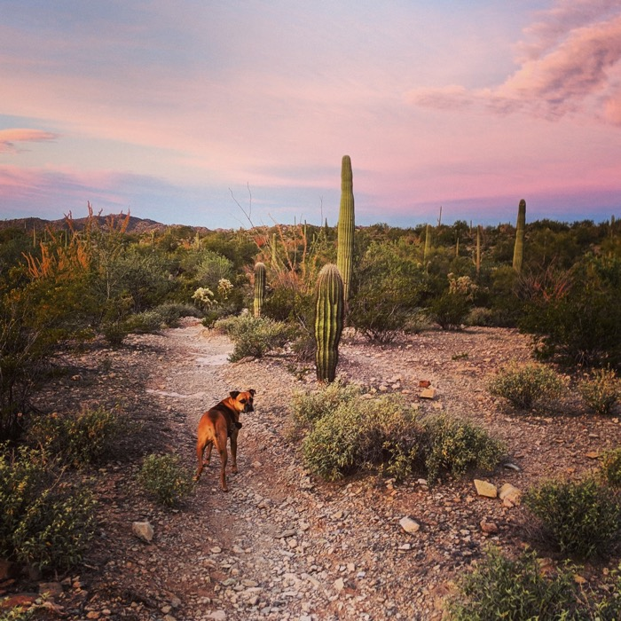hiking campground perimeter trail in organ pipe