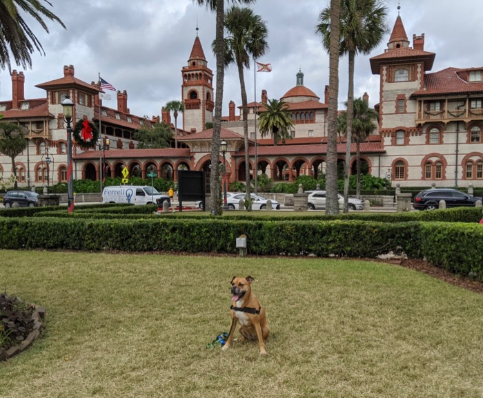 bugsy in front of flagler college