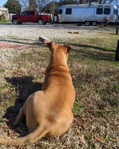 bugsy and the airstream at elmore rv campground in charlotte