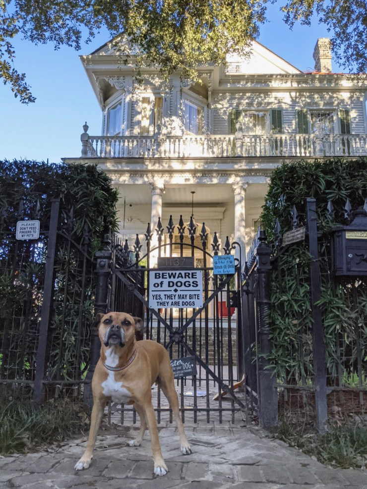 Bugsy in the Garden District