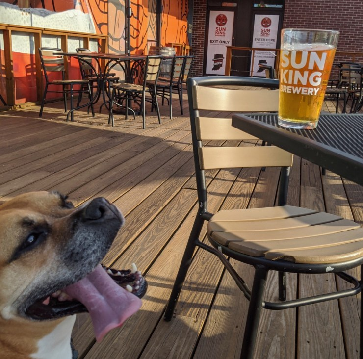 bugsy on the sun king brewing patio