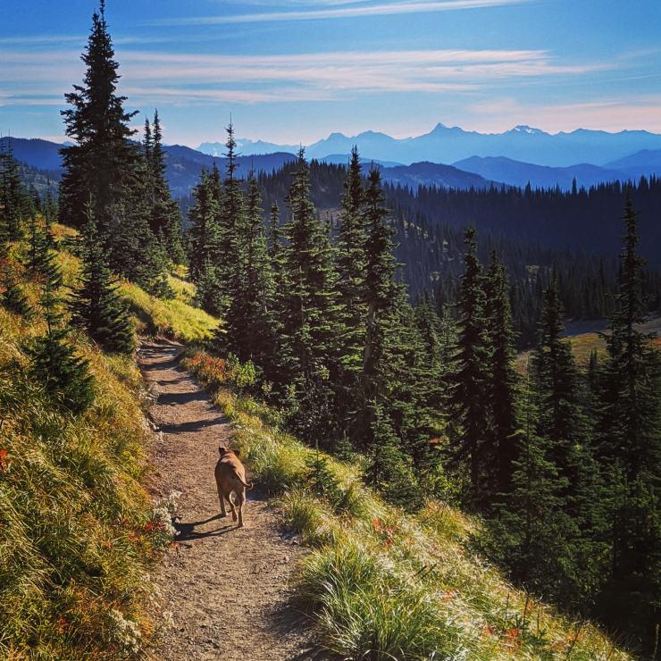 Bugsy hiking in Whitefish Montana
