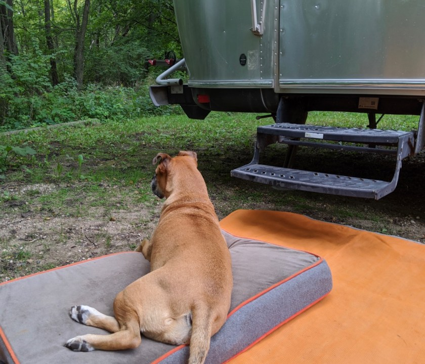 Bugsy at the airstream in New Ulm