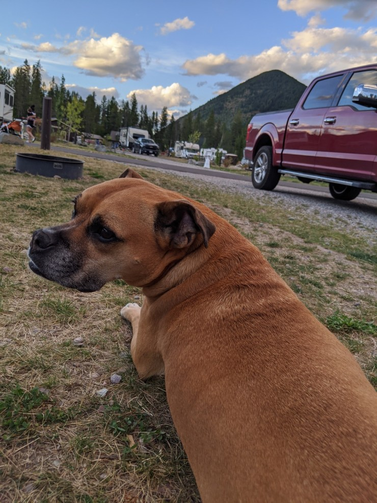 Bugsy at the campsite at West Glacier RV Park