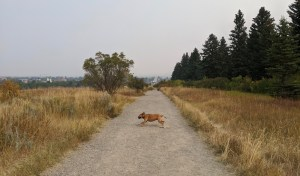 Bugsy running on Peets Hill