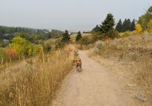 Bugsy on Peets Hill