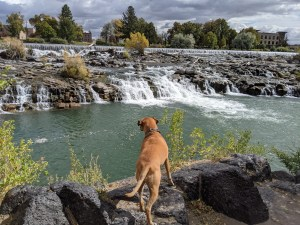 Bugsy at the falls in Idaho Falls, ID