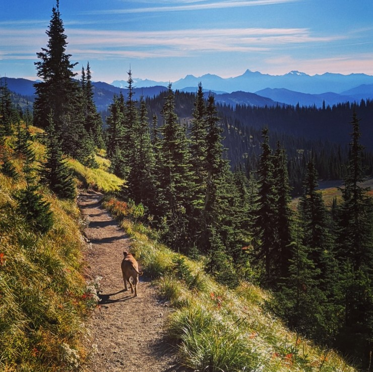 Bugsy hiking Danny On trail