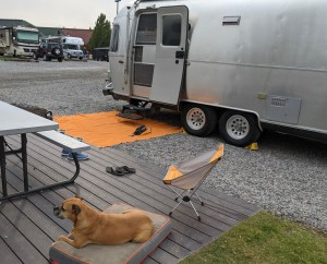 Bugsy and the Airstream in West Yellowstone