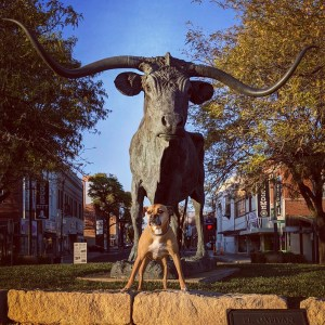Bugsy and a bull statue in Dodge City