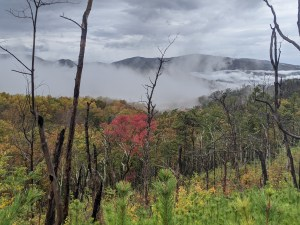fog and colors in the Smokies