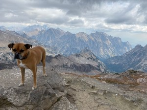 Bugsy on top of Table Mountain in the Tetons