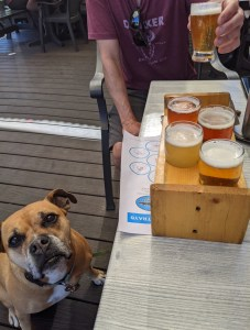 Bugsy and a beer flight at Sawtooth Brewery