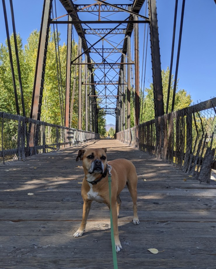 Bugsy on a bridge on the Wood River Trail