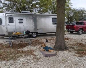 Bugsy by the Airstream at Tom Sawyer's RV Park