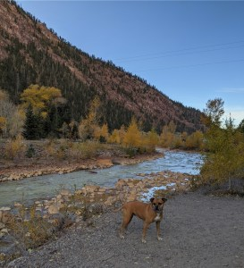 Bugsy along the Uncompahgre River