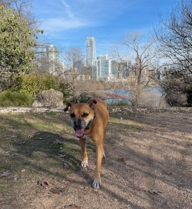 Bugsy in Zilker Park overlooking downtown Austin
