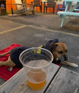 Bugsy at Craft Advisory Brewing in Ocean Springs
