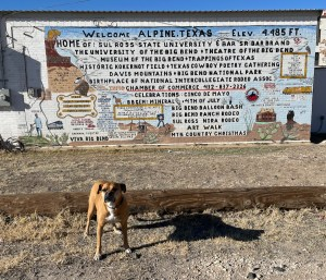 Bugsy in front of a mural in Alpine