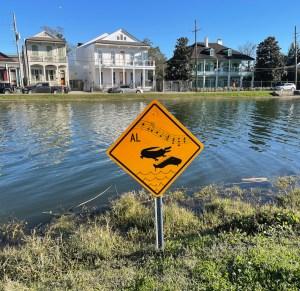 Bayou St John alligator sign