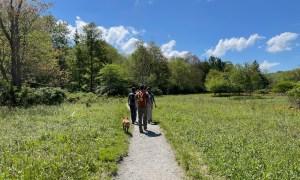 hiking along Boone Fork Trail