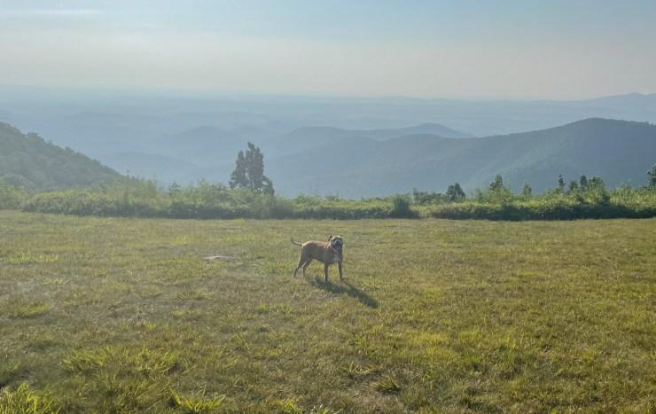Bugsy hiking the Black Ridge Trail in Floyd