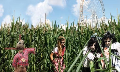 Das neue Mais-Labyrinth
