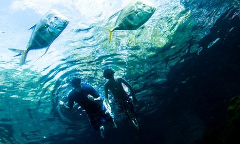 Mut beweisen im Haibecken