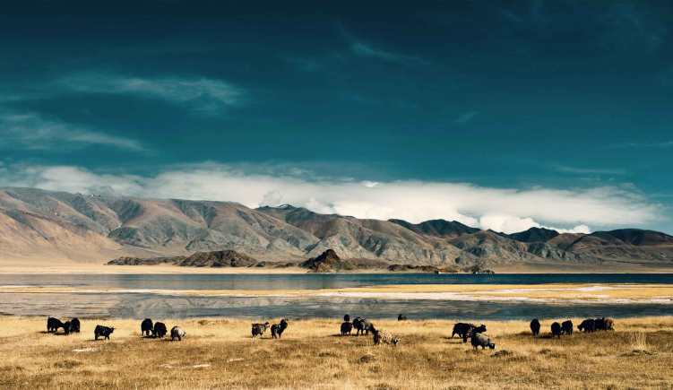 Mongolia visa requirements travel information and service mongolia visa requirements spiritdancerdesigns Images
