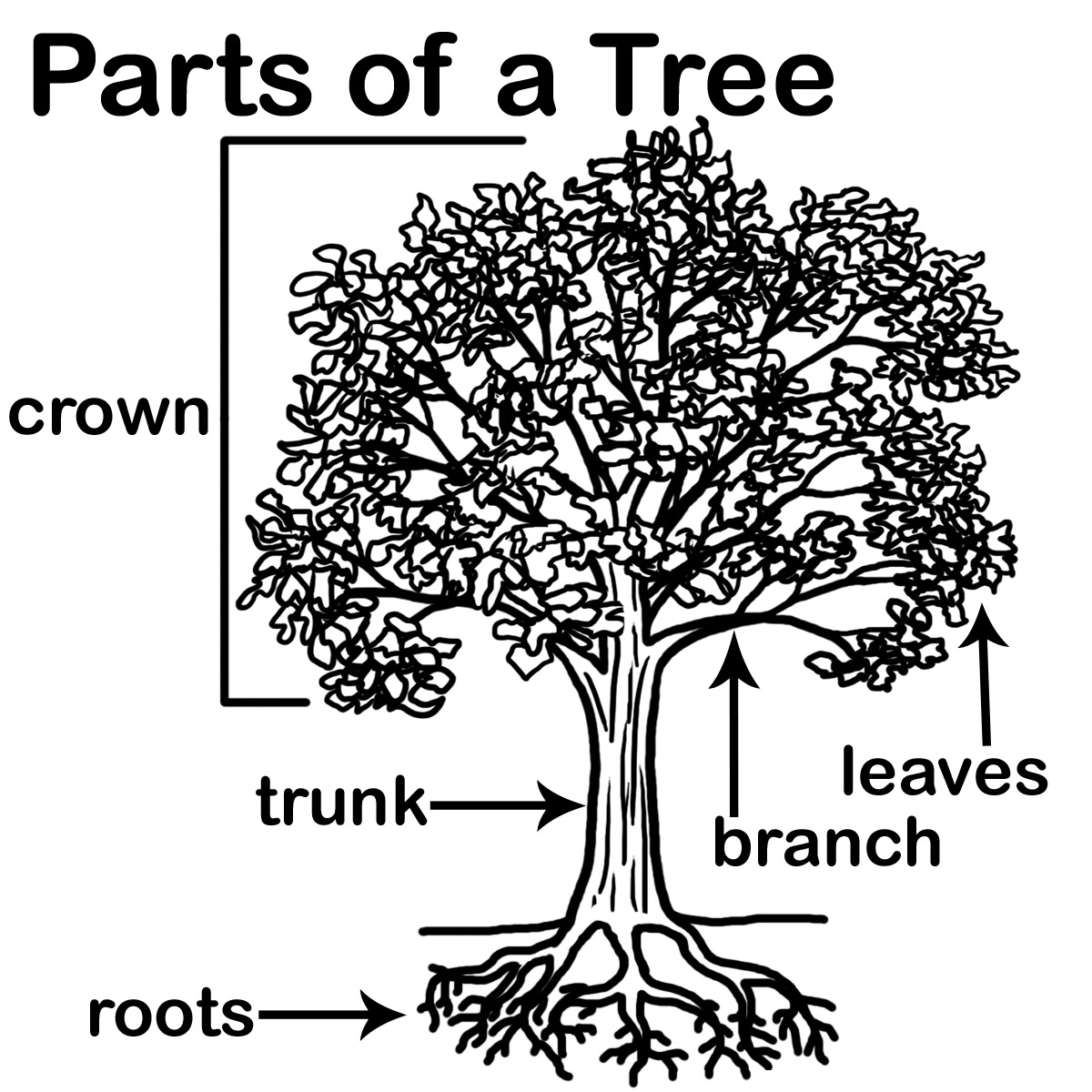 parts of a tree colouring pages