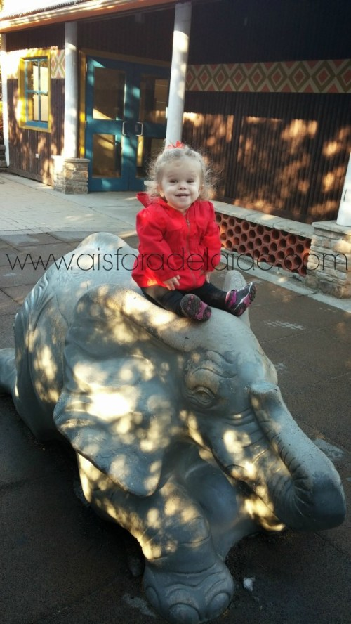 #aisforadelaide #RWPzoo #elephant
