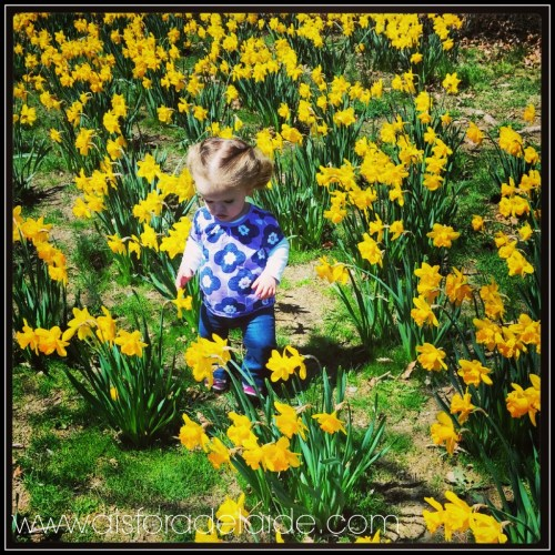 flowers #aisforadelaide #newport #cliffwalk #spring2014